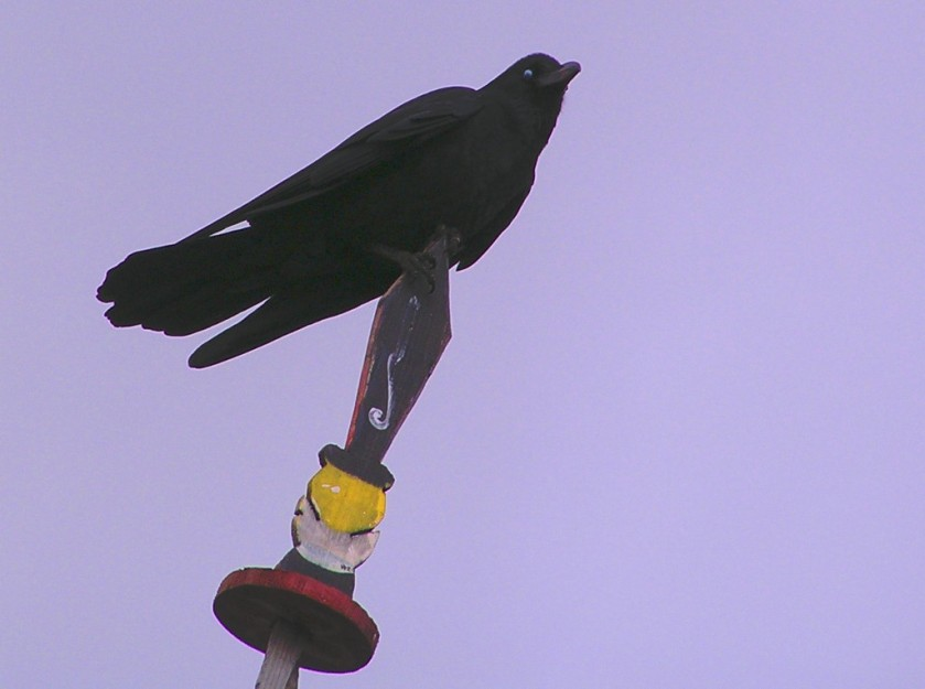 A raven comes to rest on a flag in Chele La, Bhutan