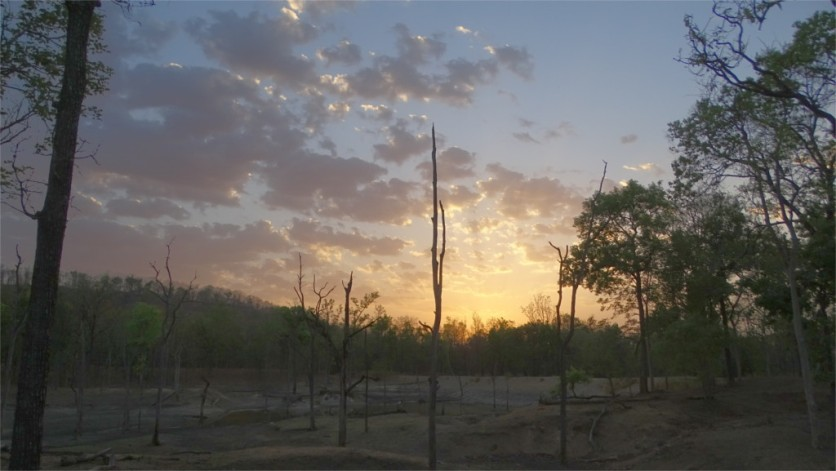 Last light in Pench