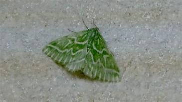 Moth166