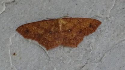 Moth168